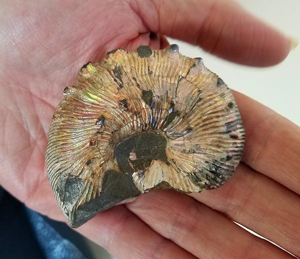 ammonite with rainbow sheen