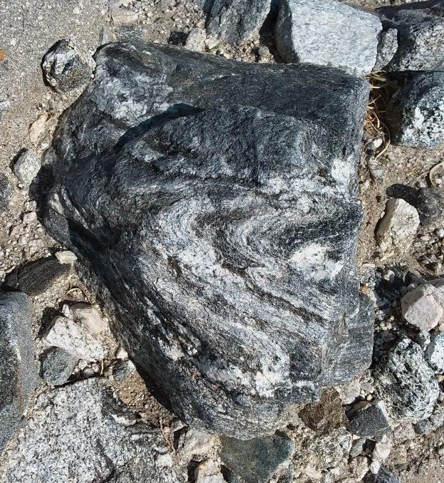 Fossilicious Blog -