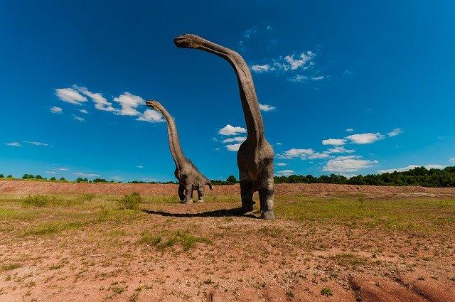Dinosaur Fossil Hunting