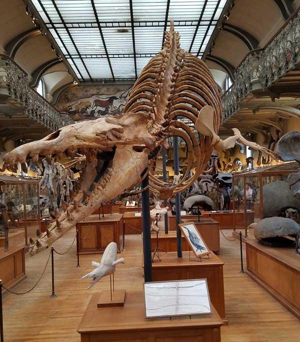 Basilisaurus