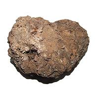 Jurassic coprolite