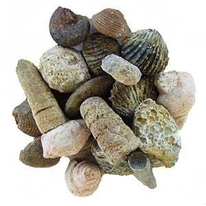 Bulk Fossils By The Pound