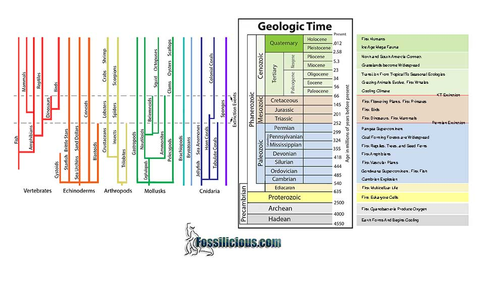 geologic time chart