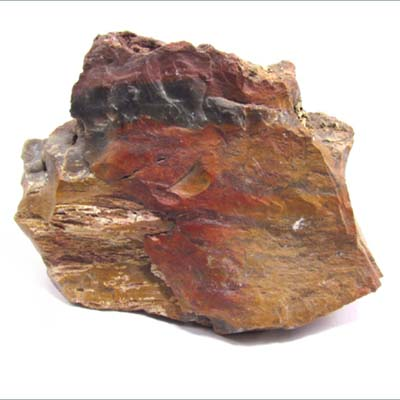 Fossil wood-Petrified Wood 04