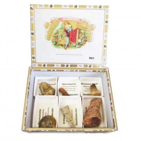 The Cigar Box Fossil Collection 6pc S
