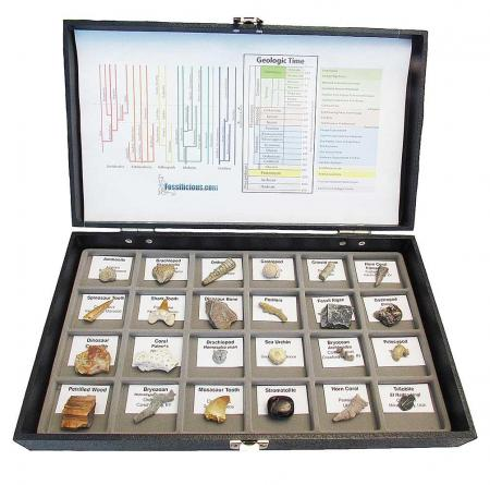 Fossil Collection 24 specimens With Display Box