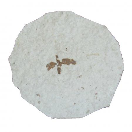 Insect Fossil With Stand B