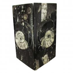 Ammonite Book Ends A