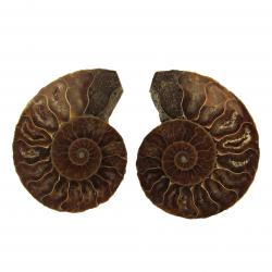 Ammonite Split Pair 4-5 cm A