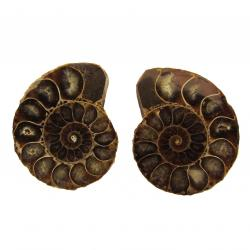 Ammonite Split Pair 4-5 cm B