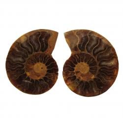 Ammonite Split Pair 4-5 cm F