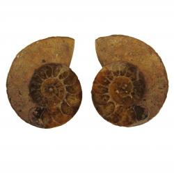 Ammonite Split Pair 4-5 cm G