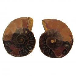Ammonite Split Pair 4-5 cm H
