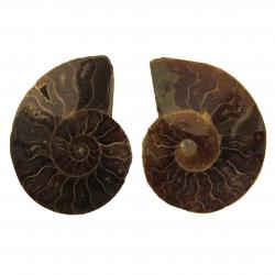 Ammonite Split Pair 4-5 cm I