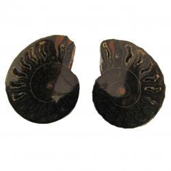 Ammonite Split Pair 4-5 cm J
