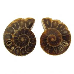 Ammonite Split Pair 4-5 cm L