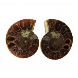 Ammonite Split Pair 4-5 cm M