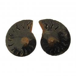 Ammonite Split Pair 4-5 cm N