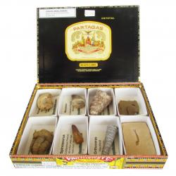 The Cigar Box Fossil Collection 8pc D