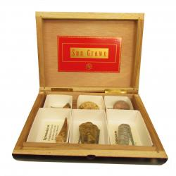 The Wooden Cigar Box Fossil Collection 6pc K