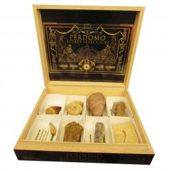 The Wooden Cigar Box Fossil Collection 8pc B