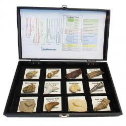 Fossil Collection 12 Large specimens With Display Box