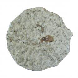 Insect Fossil With Stand E