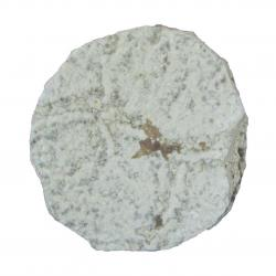 Insect Fossil With Stand K