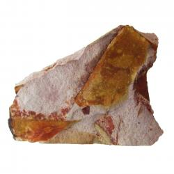 Glossopteris Browniana Leaf Fossil 6 small
