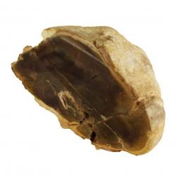 Petrified Wood With Polished Ends L