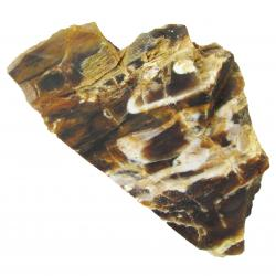 Fossil Wood Petrified Wood 01