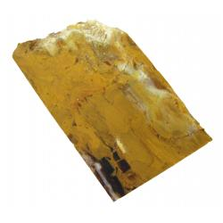 Fossil Wood Petrified Wood 06