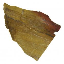 Fossil Wood Petrified Wood 08