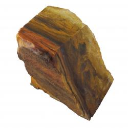 Fossil Wood Petrified Wood 09