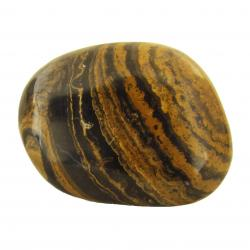 Polished Stromatolite Freeform Pieces 2 inches A