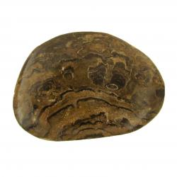 Polished Stromatolite Freeform Pieces 2 inches G