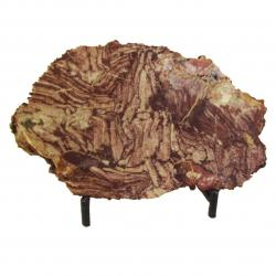 Stromatolite Slab From Morocco 02
