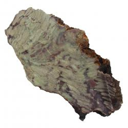 Stromatolite Slab From Morocco 04