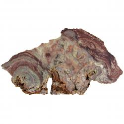 Stromatolite Slab From Morocco 05