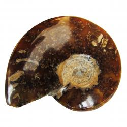 Ammonite Polished 6-8 cm P