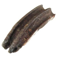 Fossil Horse Teeth