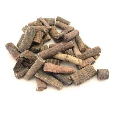 Crinoid Stems Classroom pack 20 Pieces